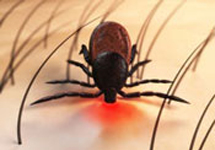 View details: Evaluating responses to Lyme disease in Massachusetts