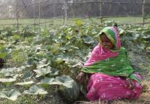 mothers become farmers Bangladesh SPRING success story