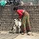 Woman collecting bricks at brick factory in Nepal